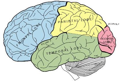 mozgii