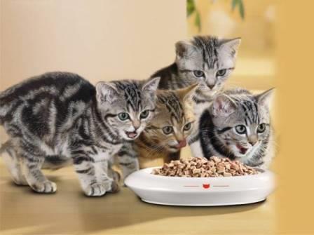 Летом кошки едят намного меньше чем зимой
