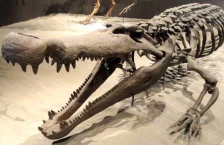 crocdeath