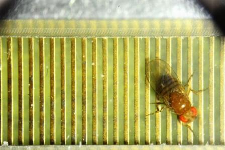 У насекомых обнаружили зачатки интеллекта