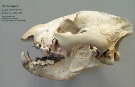Палеонтологи установят древнюю фауну Урала