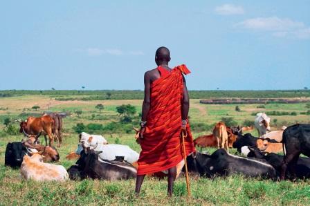 Мужчины масаи пасут коров и всегда ходят с длинными палками