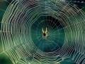 Биологи определили молекулярную структуру паутины