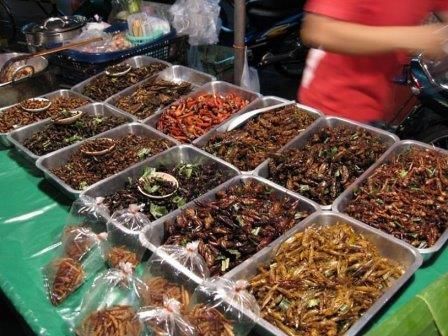 ps_insects_thai