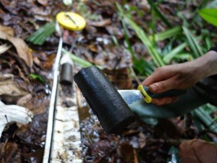 В Конго обнаружили торфяное болото размером с Англию