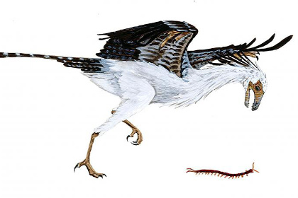 Фауна древних птиц была достаточно скудной