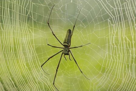 Биологи сравнили пауков с музыкантами