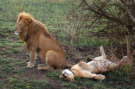 животные сексом занимаются