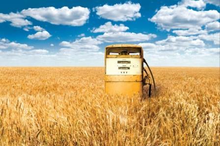 Биотопливо опасно для окружающей среды