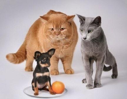 Любители кошек умнее владельцев собак