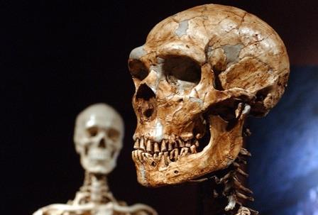 Реконструированный скелет неандертальца