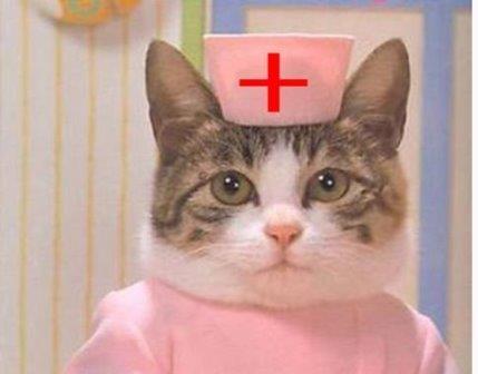 Кошки понижают давление и продлевают жизнь