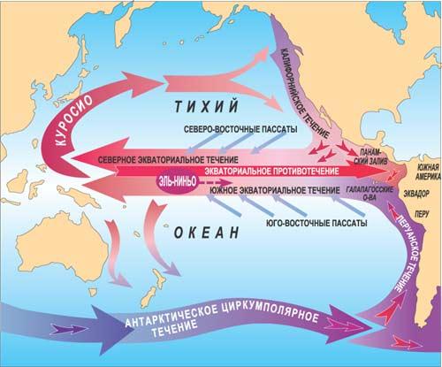 Циркуляция вод Тихого океана состоит из двух антициклонических круговоротов