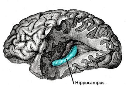 Установлен механизм «записи» информации в мозге