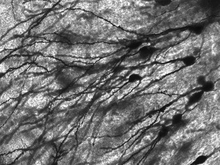 neurons-2