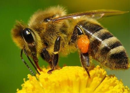 Пчелиная работа в высшей степени важна для человечества