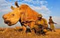 Земля на пороге Шестого глобального вымирания