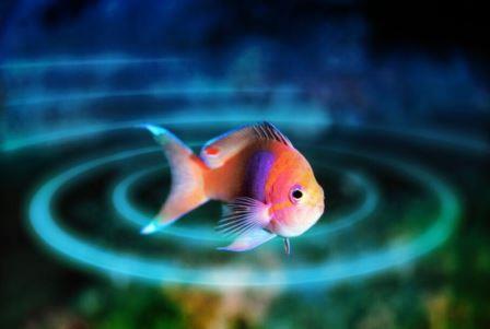 Электрические свойства всех рыб имеют общий генетический фундамент