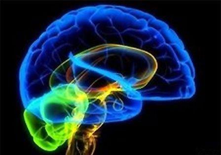 В человеческом мозге найдена «социальная сеть»