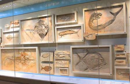 Витрина с окаменелостями из Золенгофена в Музее естественной истории Карнеги