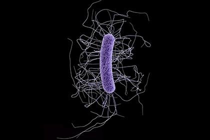 Грамположительнаая бактерия Clostridium difficile