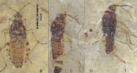 Клопы-кровососы донимали еще динозавров