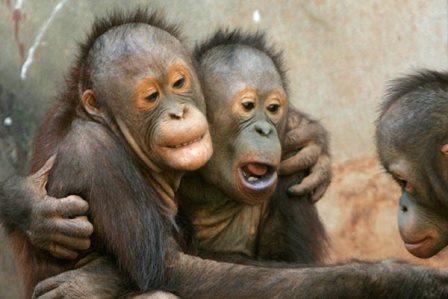 Новые теории происхождения человеческого языка