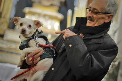 Биологическую природу ревности доказал эксперимент на собаках