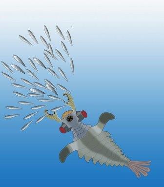 Lyrarapax unguispinus охотится на рыбообразные кембрийские организмы