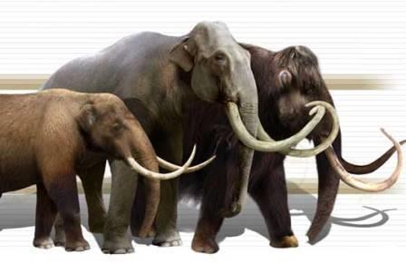 Американский мастодонт и два мамонта – Колумба и шерстистый