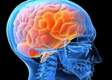 Опровергнута теория об использовании всего 10% мозга