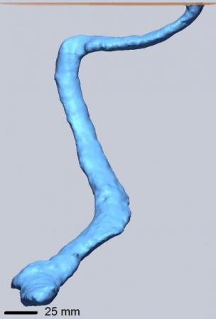 Компьютерная реконструкция скорпионьей норы