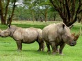 Сокращение популяций диких животных может привести к войнам и рабству