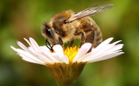 """О чём """"кричат"""" бразильские пчёлы"""