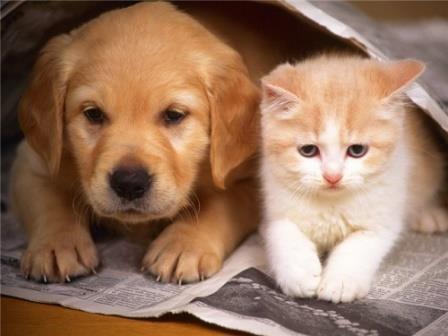В чём причины сходства домашних животных