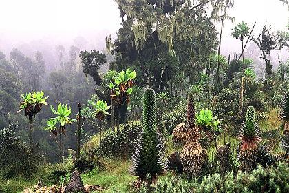 plants123