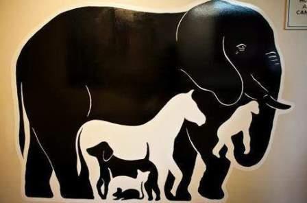Кошка и слон справляют малую нужду за 20 секунд
