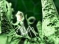 Бактериофаг атакует бактерию