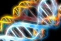 Обнаружена генетическая основа, определяющая пол