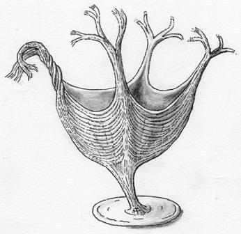 Haootia quadriformis в представлении художника