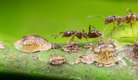 Среда обитания муравьев влияет на развитие их личности