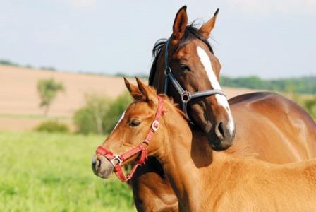 """Лошади умеют """"разговарить"""" друг с другом"""