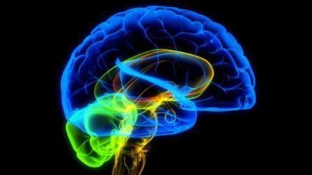 Обнаружена часть мозга, которая не стареет