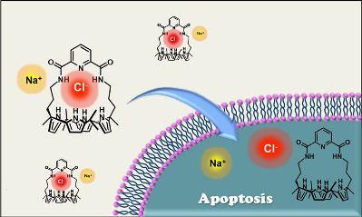 Синтетические переносчики ионов могут индуцировать апоптоз за счет усилениятранспорта хлорид-анионов в клетку