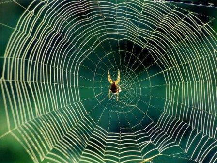 В чём секрет прочности паутины