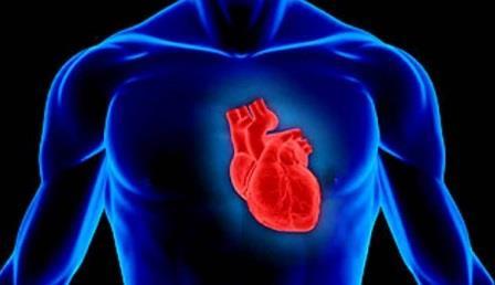 Создан первый биологический кардиостимулятор