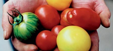 Биологи создают помидор, который будет расти 24 часа в сутки