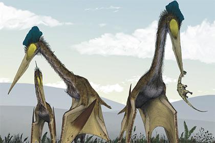 Российский палеонтолог исследовал крупнейших летающих ящеров