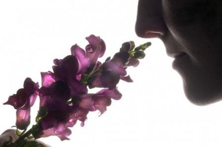 Мозг способен различать запахи по «смыслу»