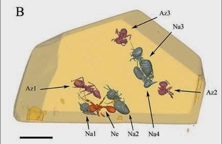 Серые - термиты, фиолетовые - муравьи, оранжевый - муравей-легионер.